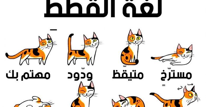 تصرفات القطط ومعانيها