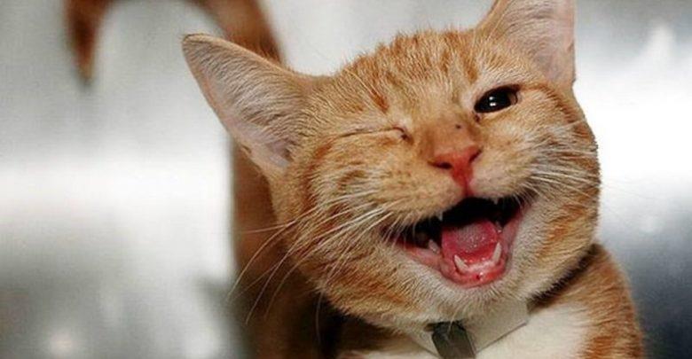 رائحة الفم الكريهة عند القطط